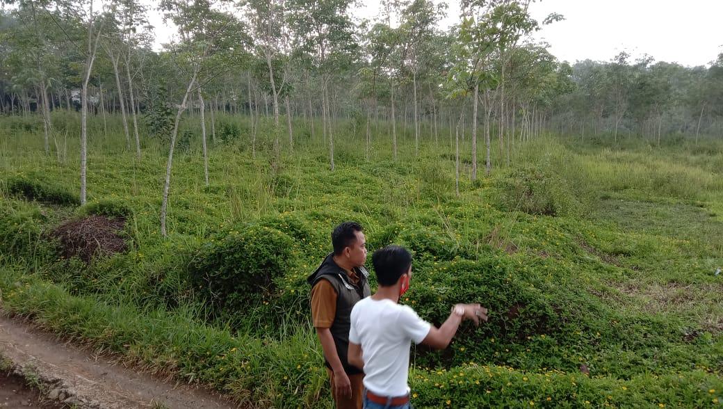 Calon Spot Camping Ground Desa Kadununggal Kalapan